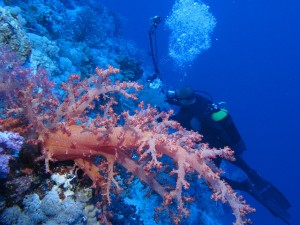 Photography at Habili Ali, St John's reefs, Red Sea, Egypt by Derek Keats